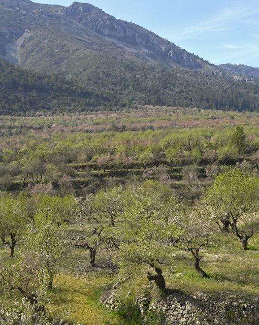costa blanca alcala tollos campo y montana