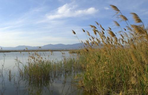 COSTA BLANCA Parque Natural El Hondo