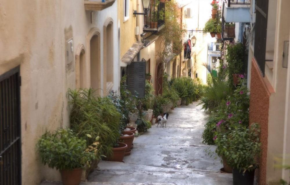 costa blanca calpe calle repleta de plantas