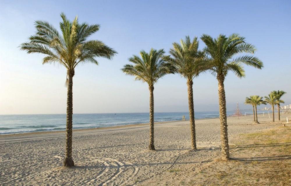 costa blanca campello bonitas palmeras de la playa