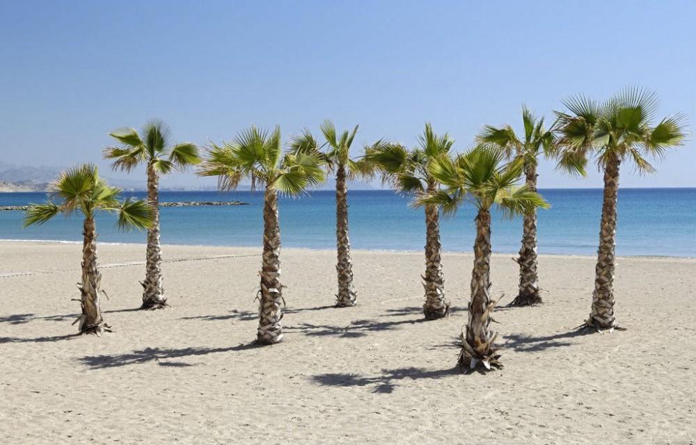 costa blanca campello preciosas palmeras de la playa