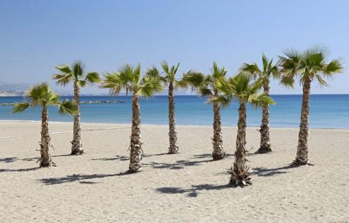 COSTA BLANCA EL CAMPELLO palmeras de la Playa