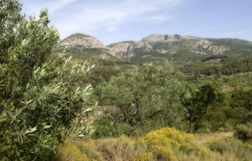 costa blanca comtat olivas de alcoleja