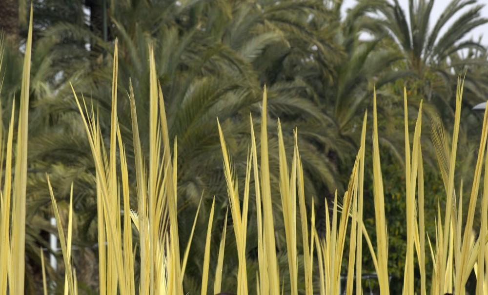 costa blanca elche ramos tipicos de semana santa