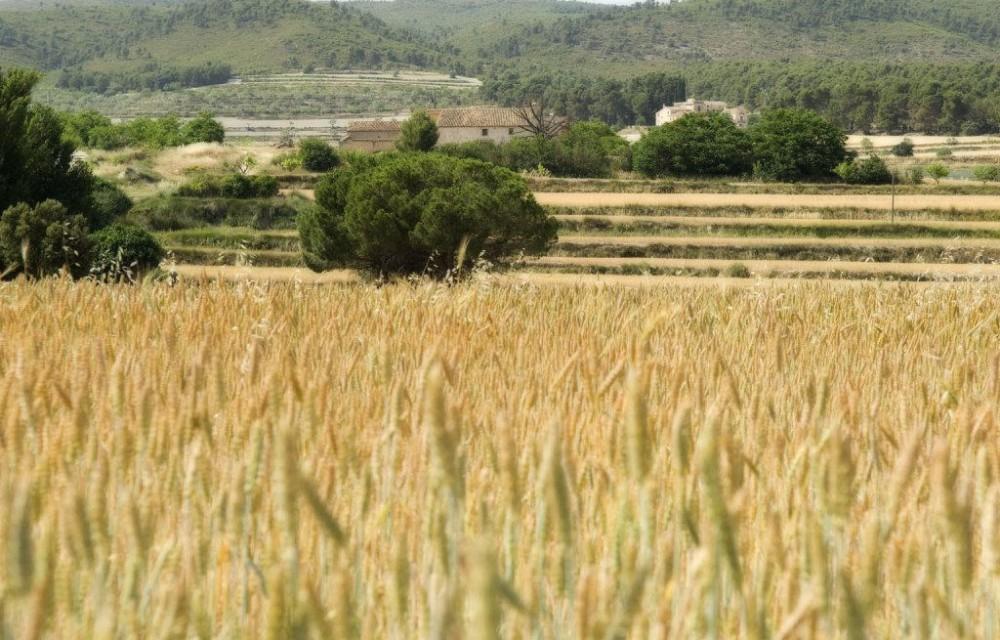 costa blanca font roja paisaje de agricultura