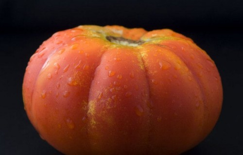 COSTA BLANCA Tomate de Mutxamel