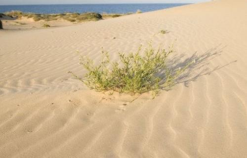 costa blanca guardamar dunas de arena