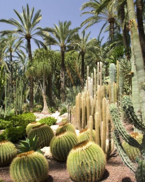 costa blanca hotel huerto del cura jardines y plantas