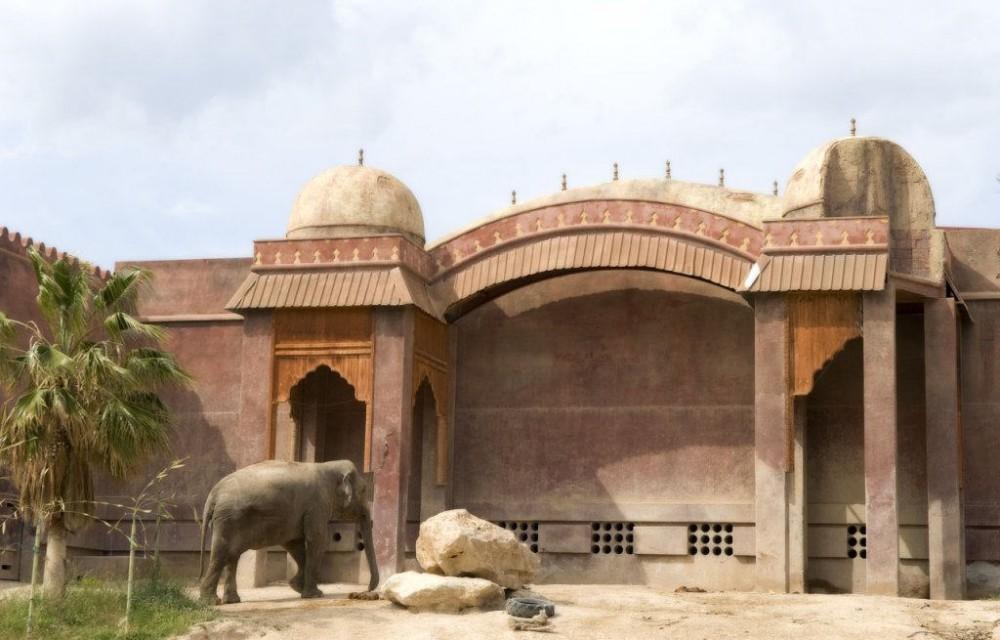 costa blanca parque atracciones benidorm elefantes