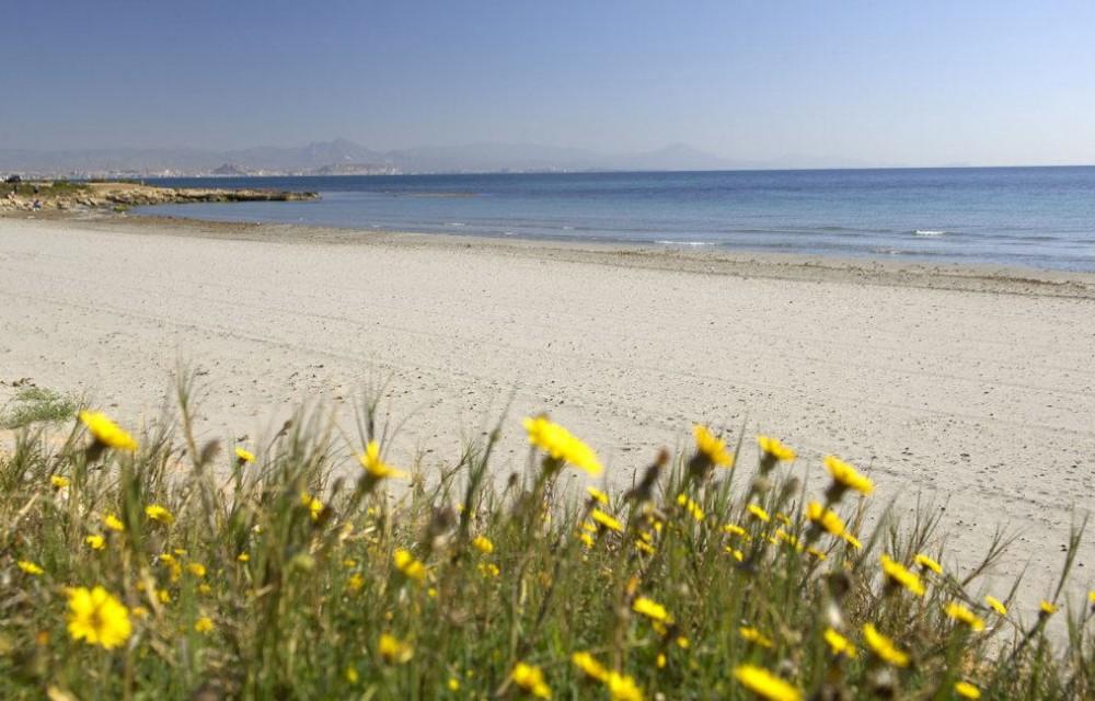 costa blanca playa arenales elche alicante de fondo