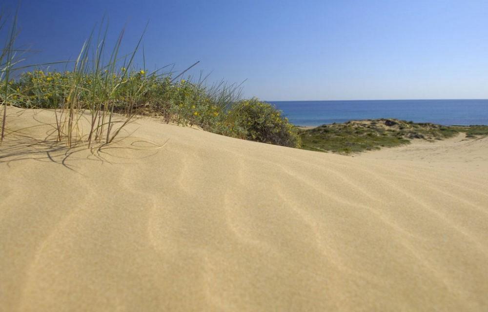 costa blanca playa arenales elche arena y mar al fondo