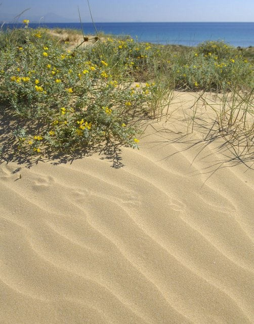 costa blanca playa arenales elche dunas de arena y flores