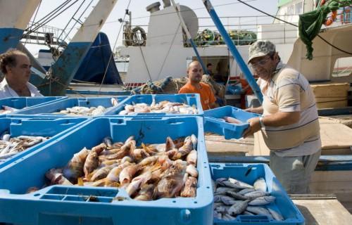 costa blanca santa pola lonja fantastico pescado fresco