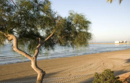 costa blanca santa pola playa varadero arbol en la arena