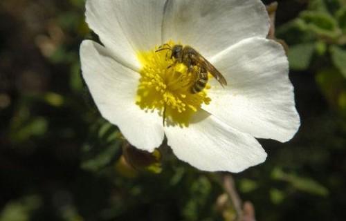 COSTA BLANCA Parque Natural SIERRA HELADA (Serra Gelada) Flora