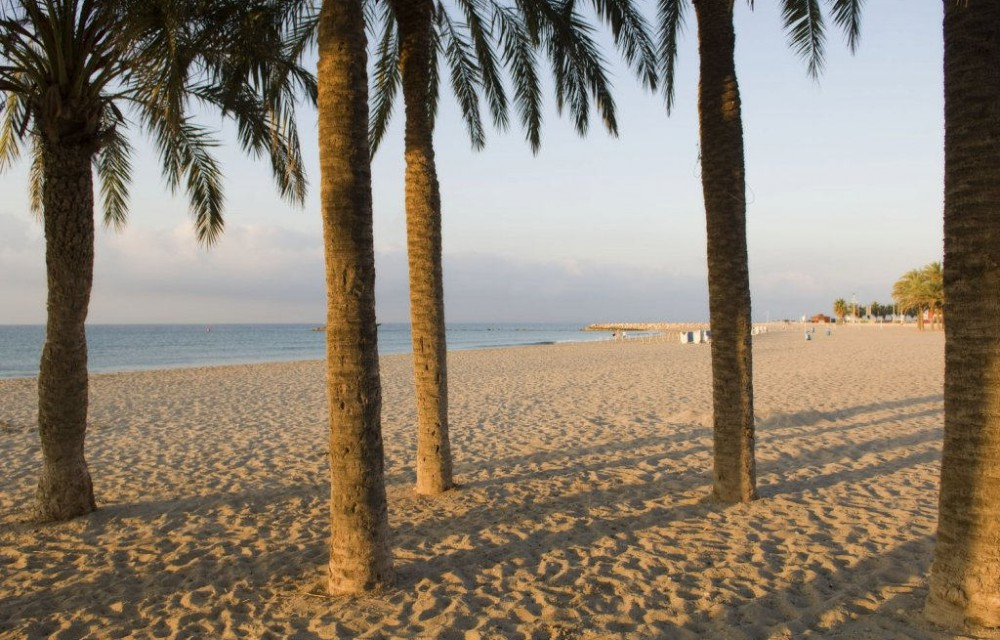 costa blanca villajoyosa amanecer en las palmeras de la playa